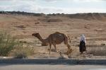 Beduin med kamel
